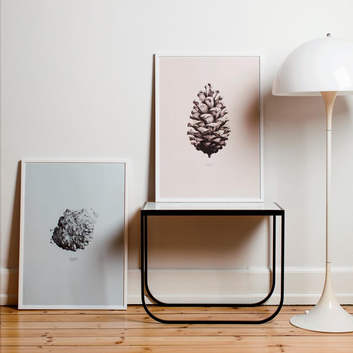 Pine-Cone-Ambiente